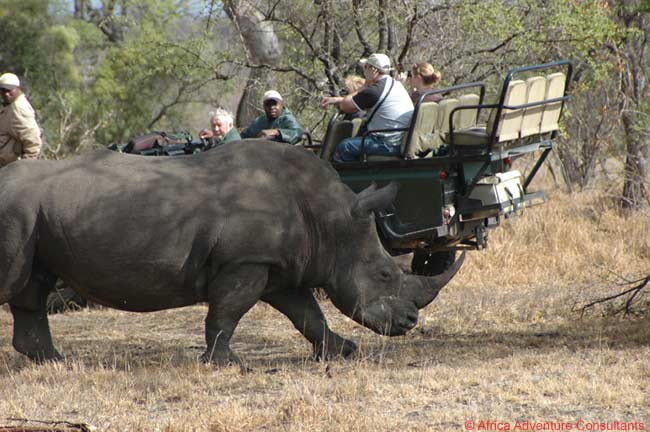 Safari Travel Specialist Offers Value-Priced South Africa