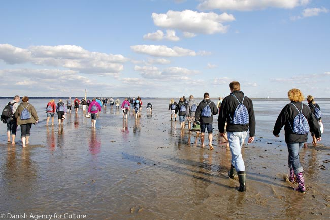 A party of nature-watchers goes for a walk along the shore of the Danish Wadden Sea