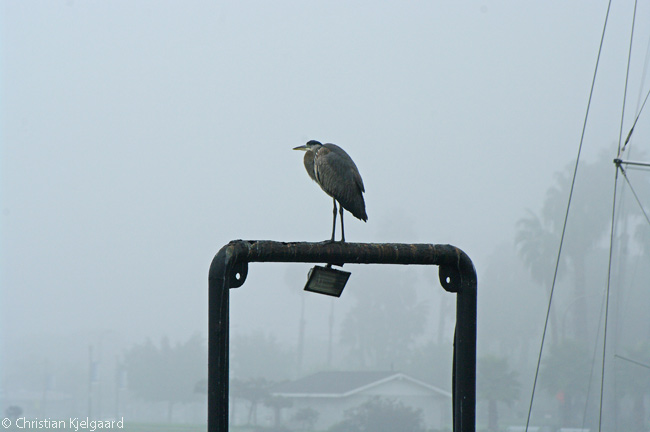 A heron perches on a pier structure next to the shoreline path at the southeastern ends of the grounds of the Hotel Maya