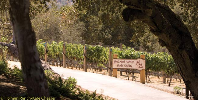 The 402-acre spread of Holman Ranch contains vineyards which supply the property's on-site estate winery, the eponymous Holman Ranch Vineyards